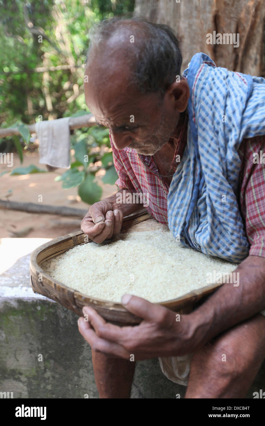 Old man cleaning rice. District Hazaribaug, Jharkhand, India - Stock Image