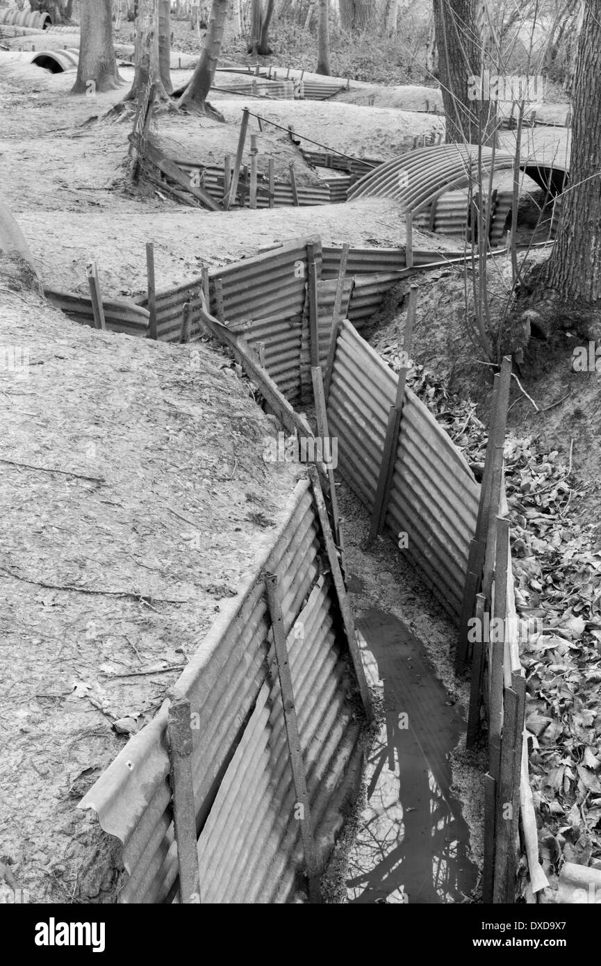 Restored British WW1 trench system at Sanctuary Wood, Hill 62, nr Ypres (Ieper), Belgium - Stock Image