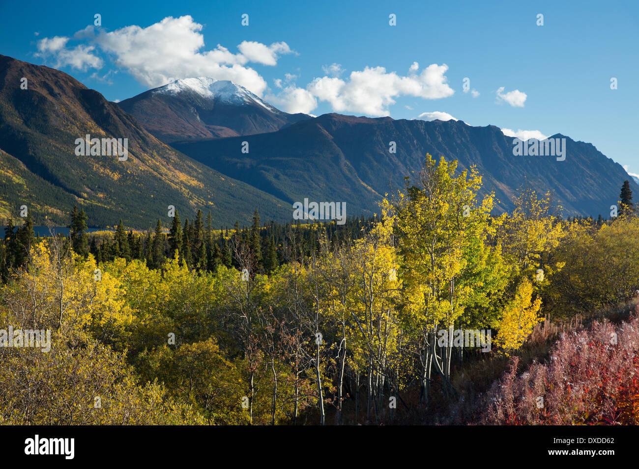 autumn colours on the South Klondike Highway nr Tagish Lake, with Escarpment Mountain, Yukon Territories, Canada - Stock Image