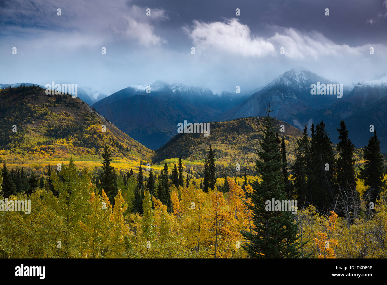 Autumn colours and Young Peak, British Columbia, Canada Stock Photo