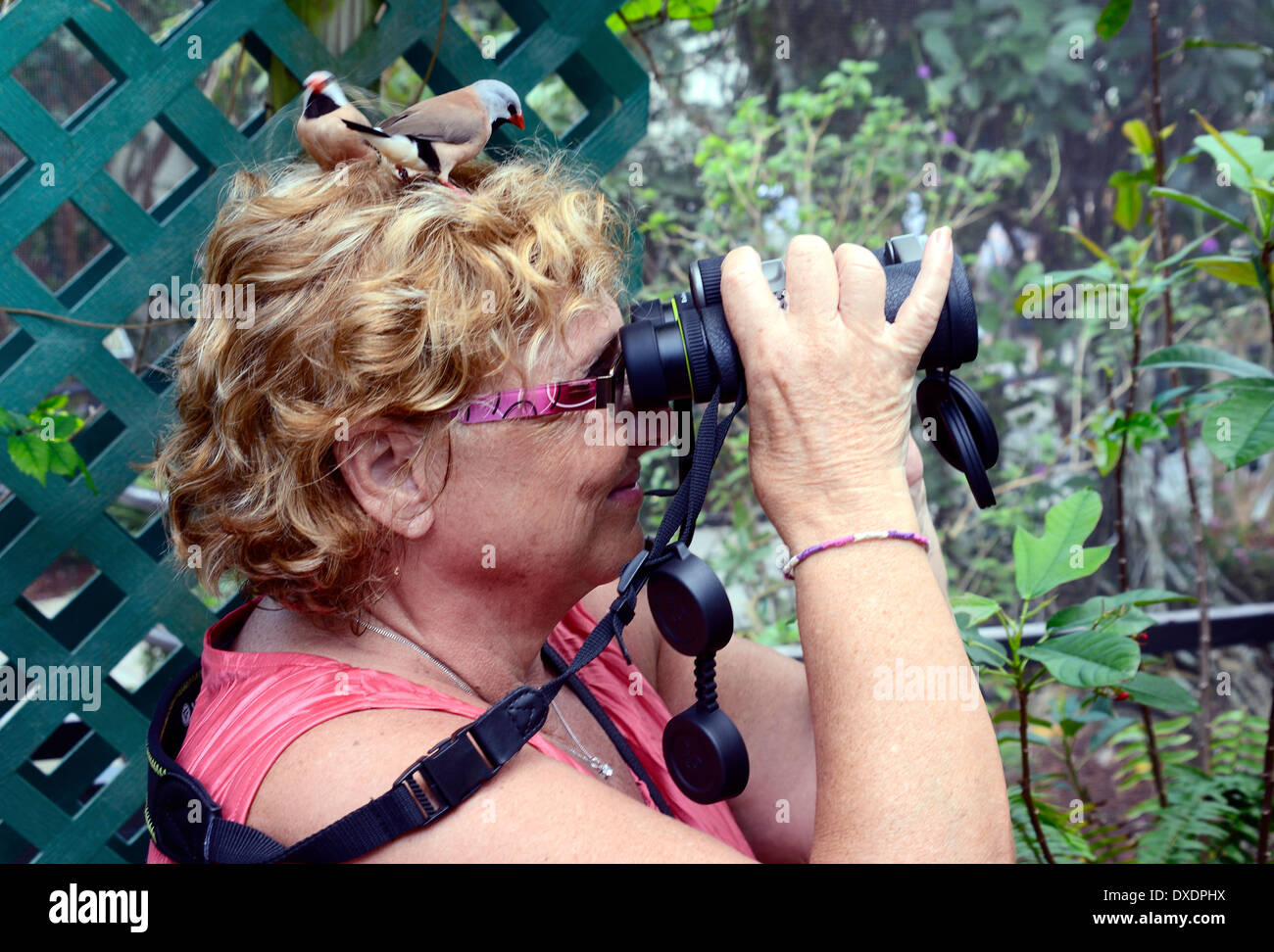 birds land on a woman's head in an aviary, she is unaware! - Stock Image