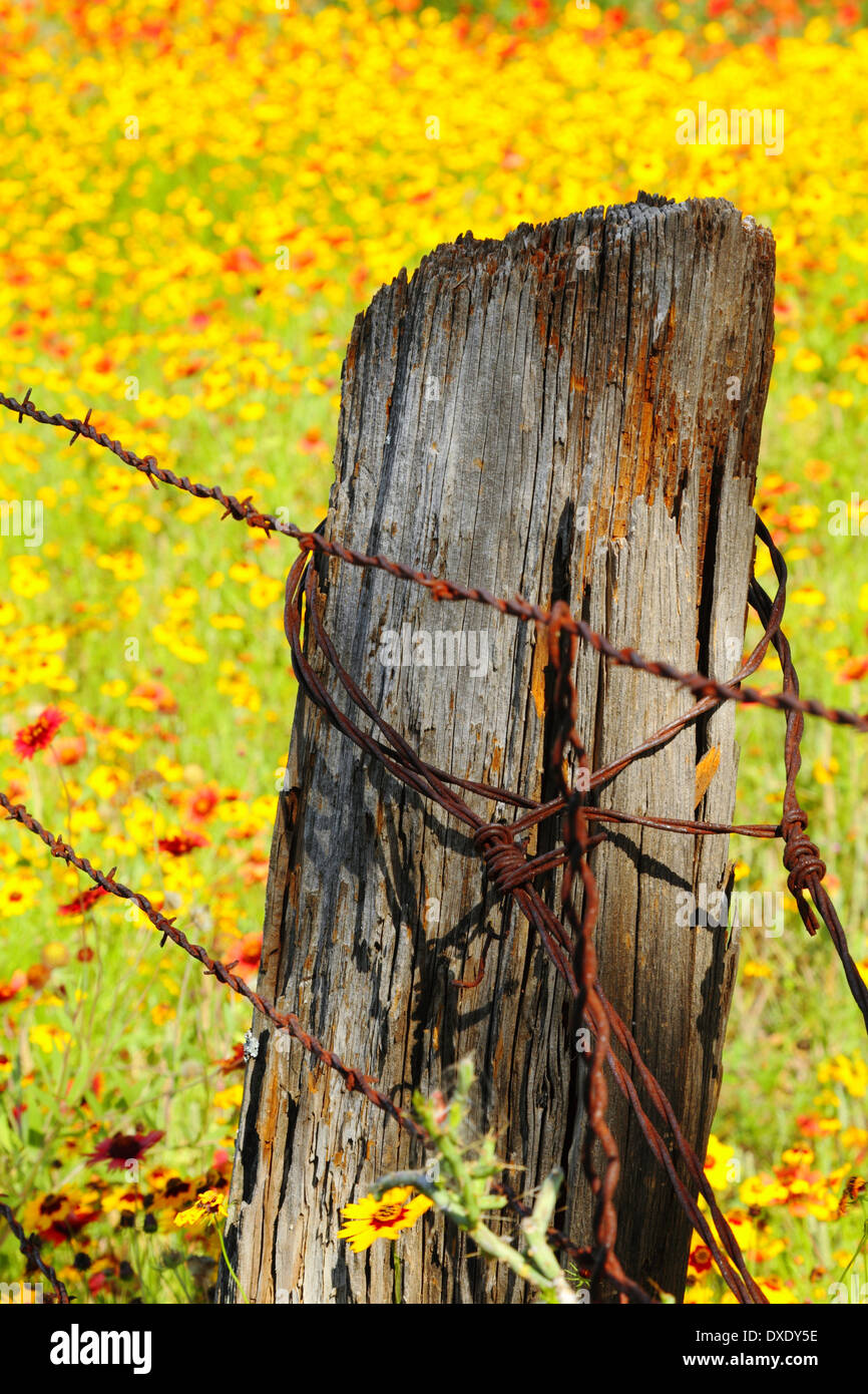An old barbed wire fence and wooden post surrounded by a field of spring wildflowers in Texas, USA. - Stock Image