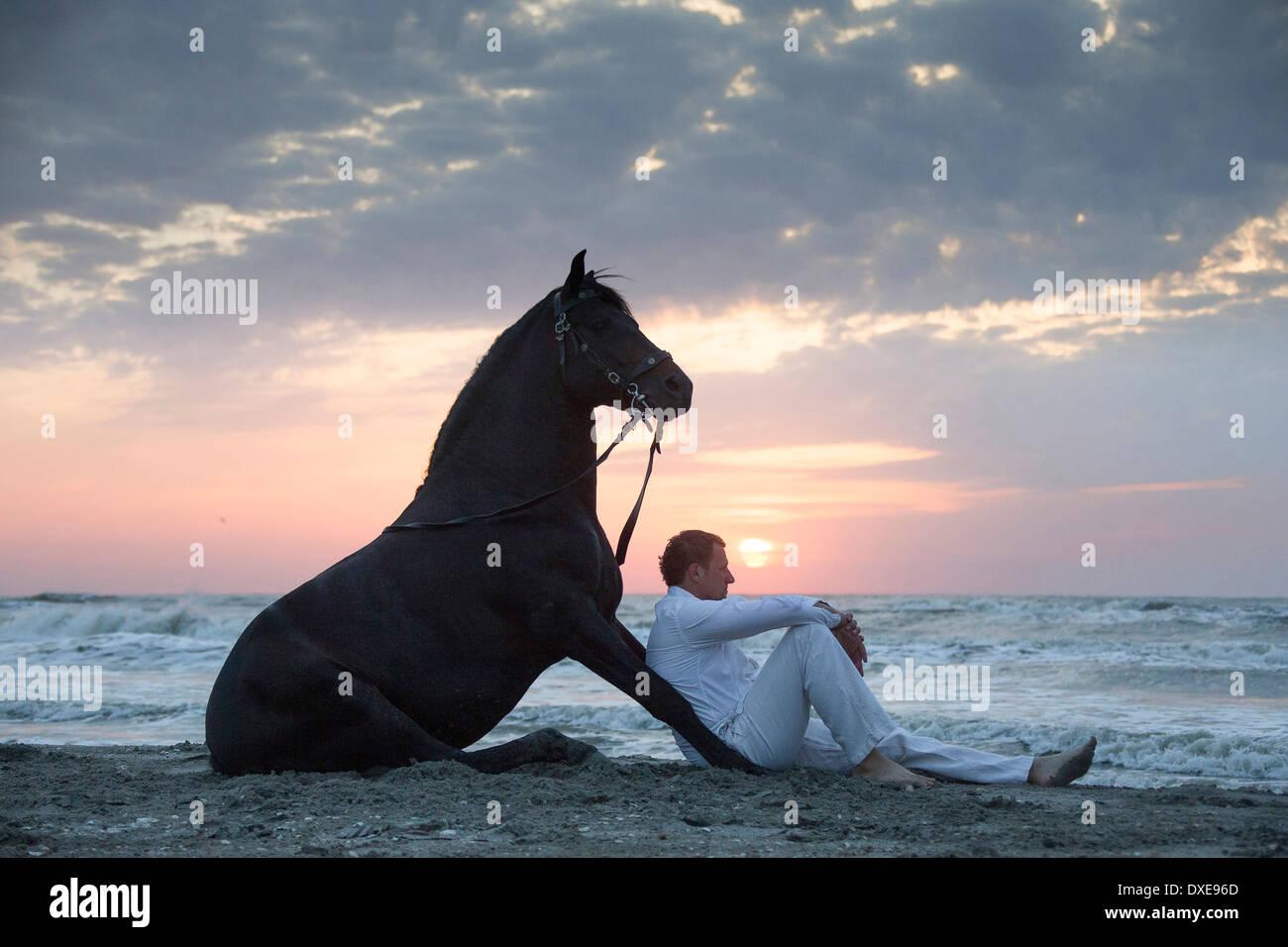 Pure Spanish Horse, Andalusian. Stuntman Vali Vasilescu with bay stallion sitting on a beach at sunset. Romania - Stock Image