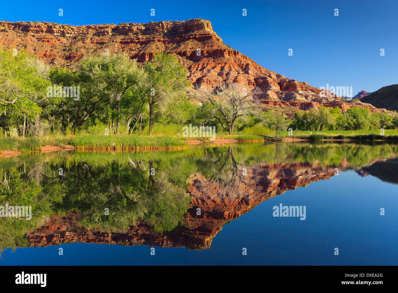 A Morning Reflection in Zion National Park, Utah, USA - Stock Image