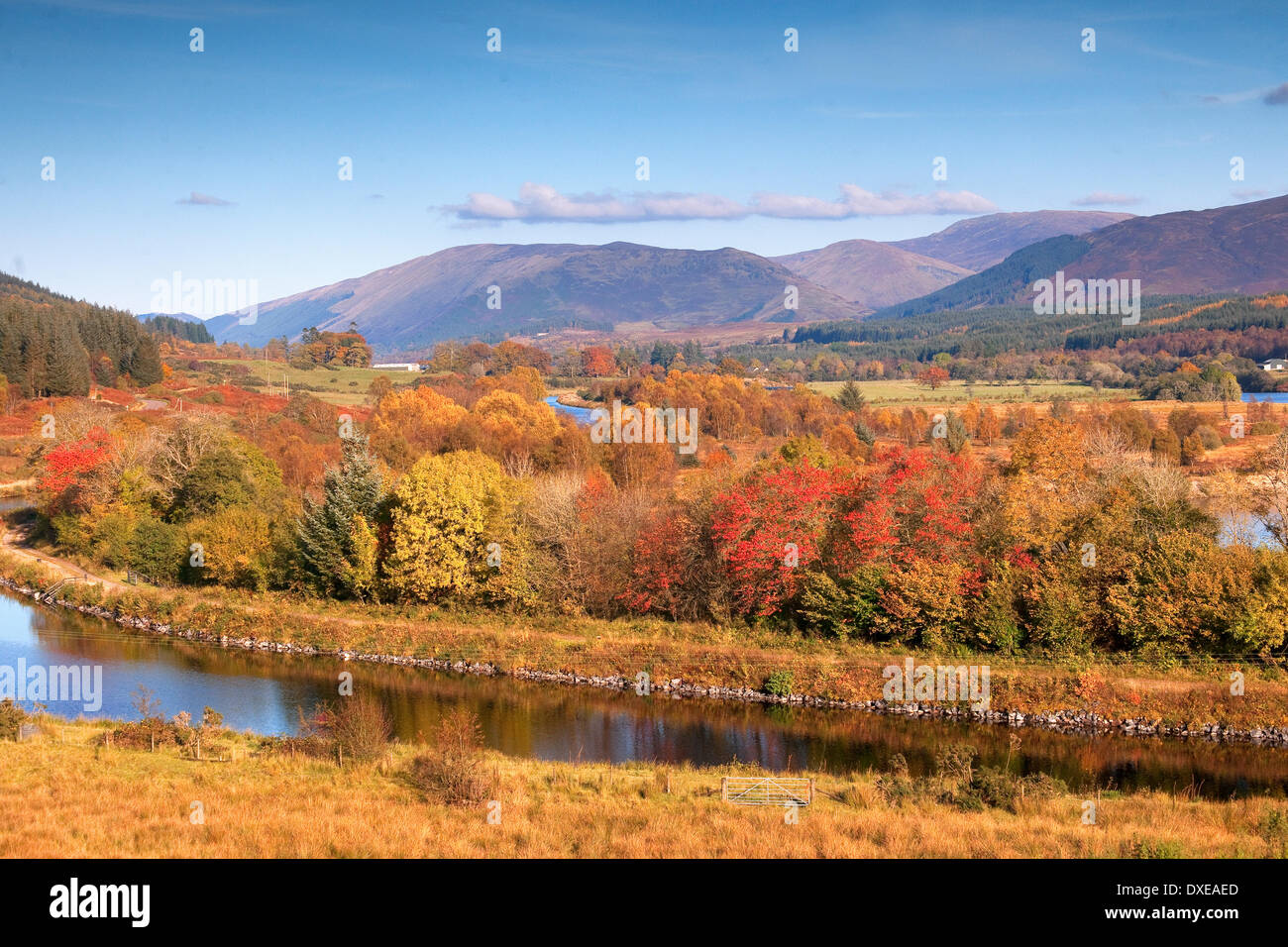 Rich autumn colours around the Caledonian canal near Gairlochy,Lochaber,West Highlands - Stock Image