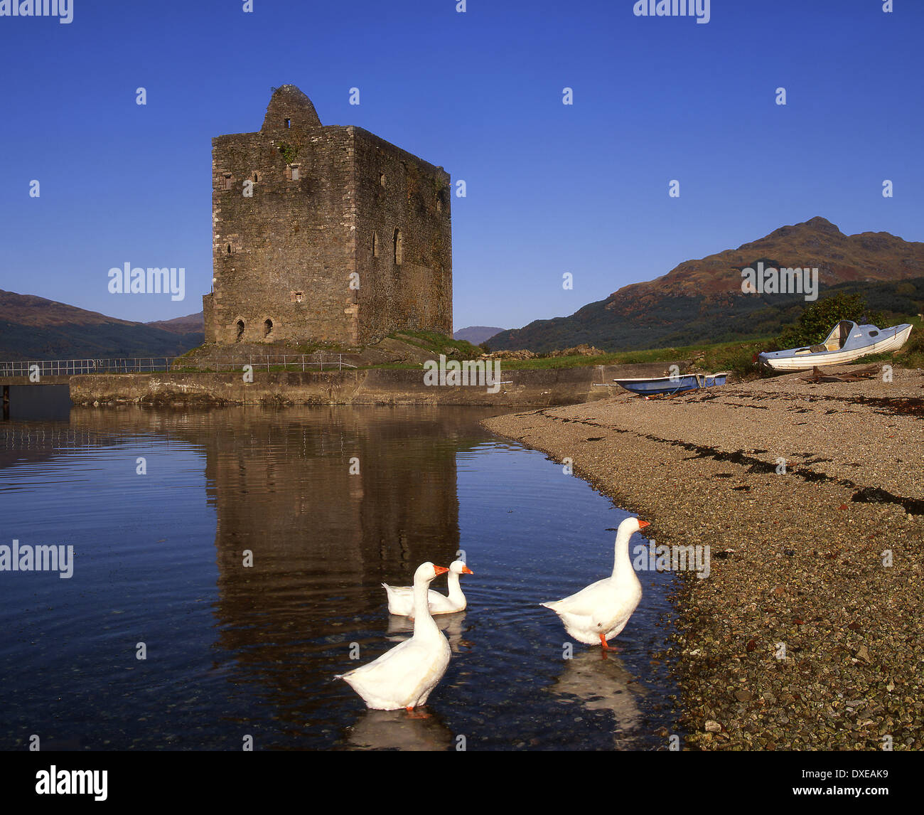 Carrick castle from the shore of Loch Goil,Argyll,Scotland.with Geese. Stock Photo