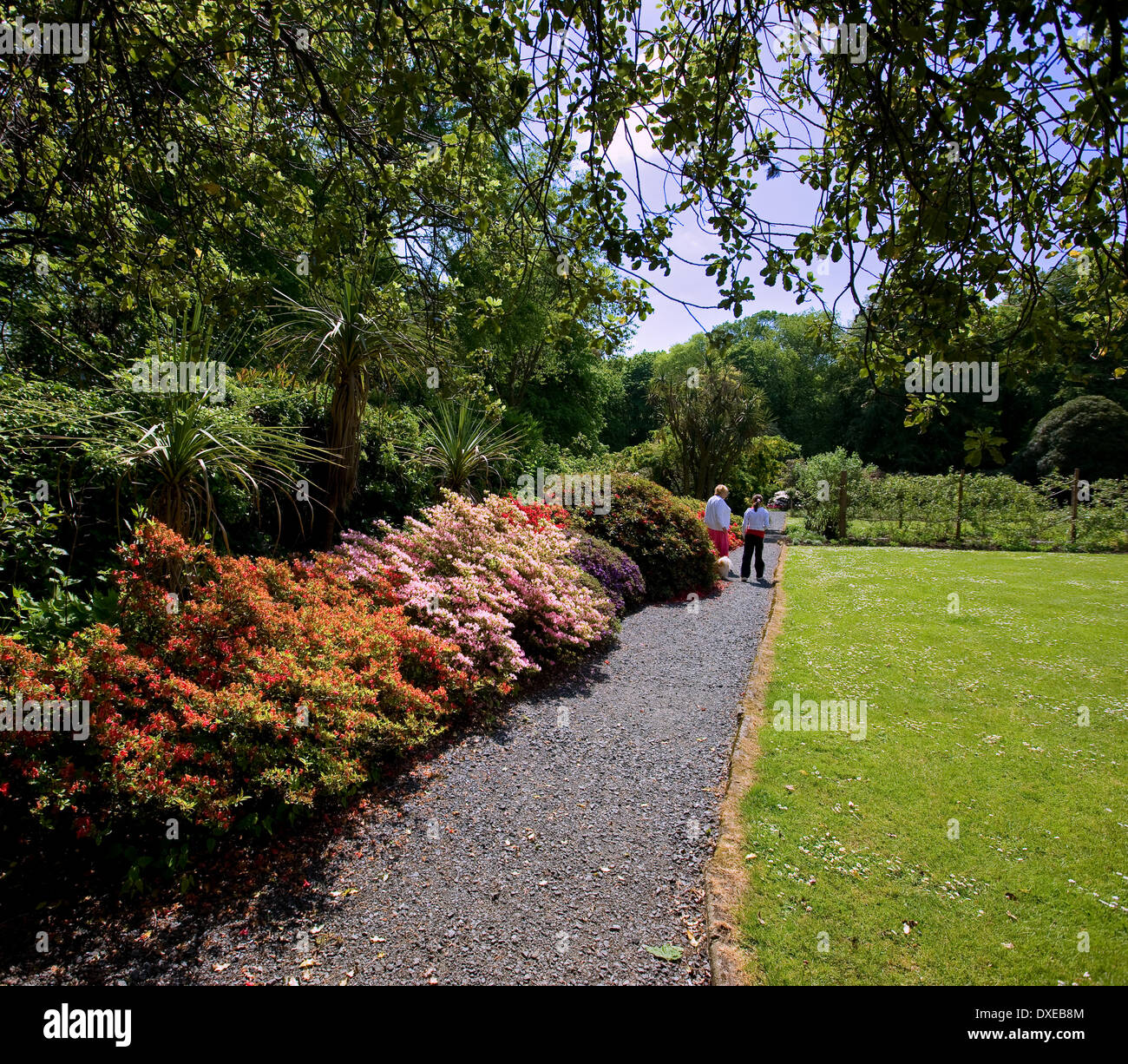 The beautiful gardens of Achamore on the isle of Gigha, Argyll - Stock Image