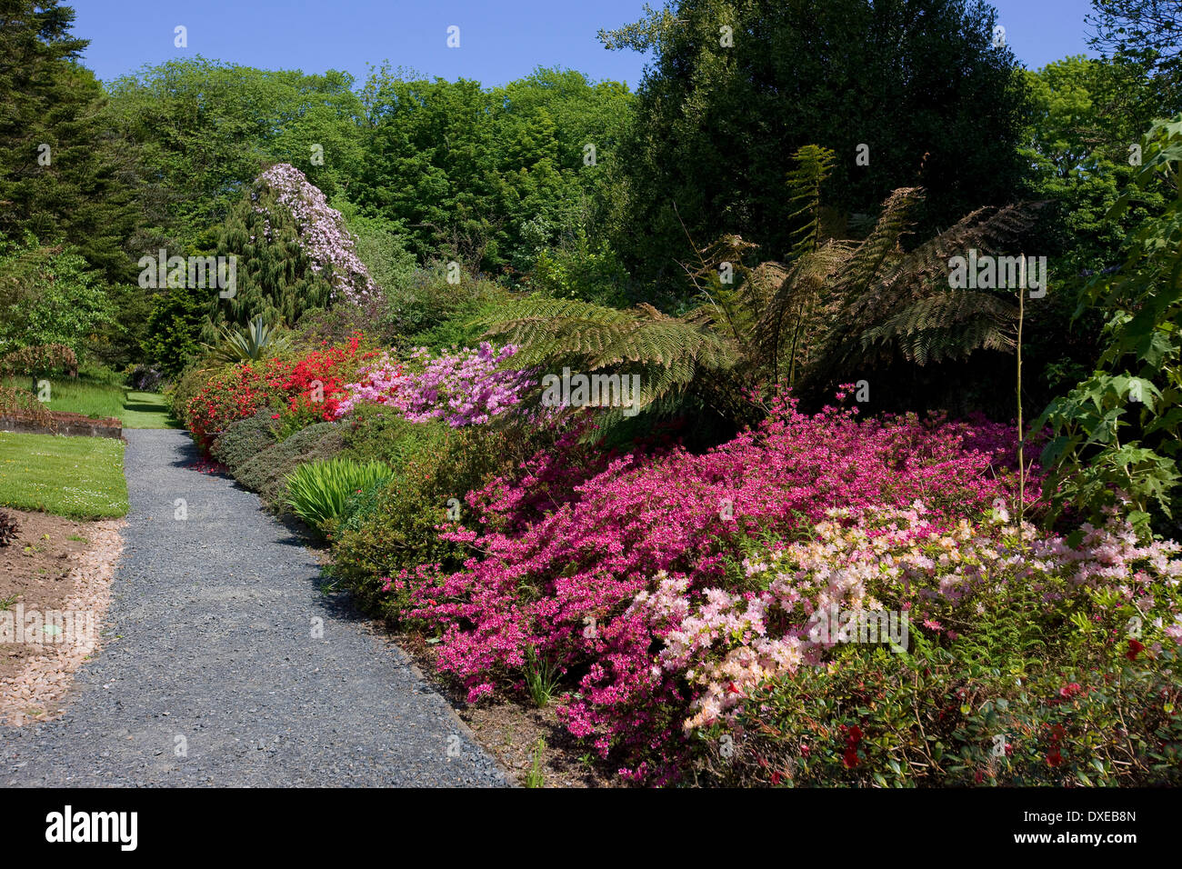 The beautiful gardens at Achamore, Isle of Gigha, Argyll - Stock Image