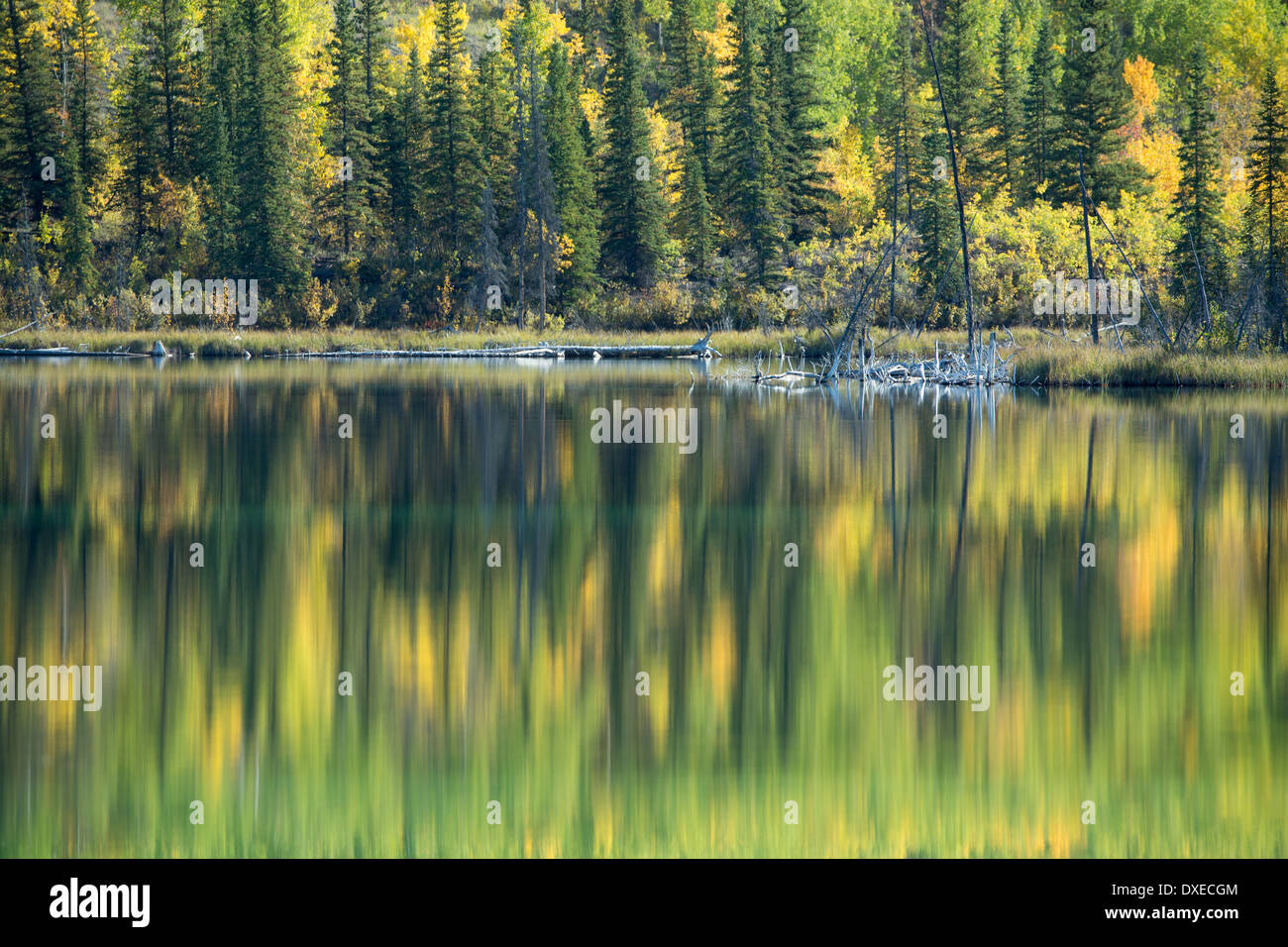 Autumn colours nr Pelly Crossing, Yukon Territories, Canada - Stock Image