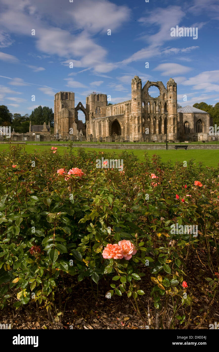 Summer view of Elgin cathedral from rose beds,Elgin,Moray Stock Photo