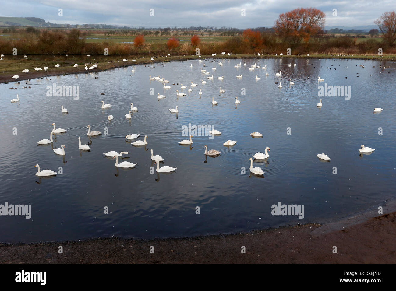 Caerlaverock from the Peter Scot hide, Dumfries, February 2014 - Stock Image