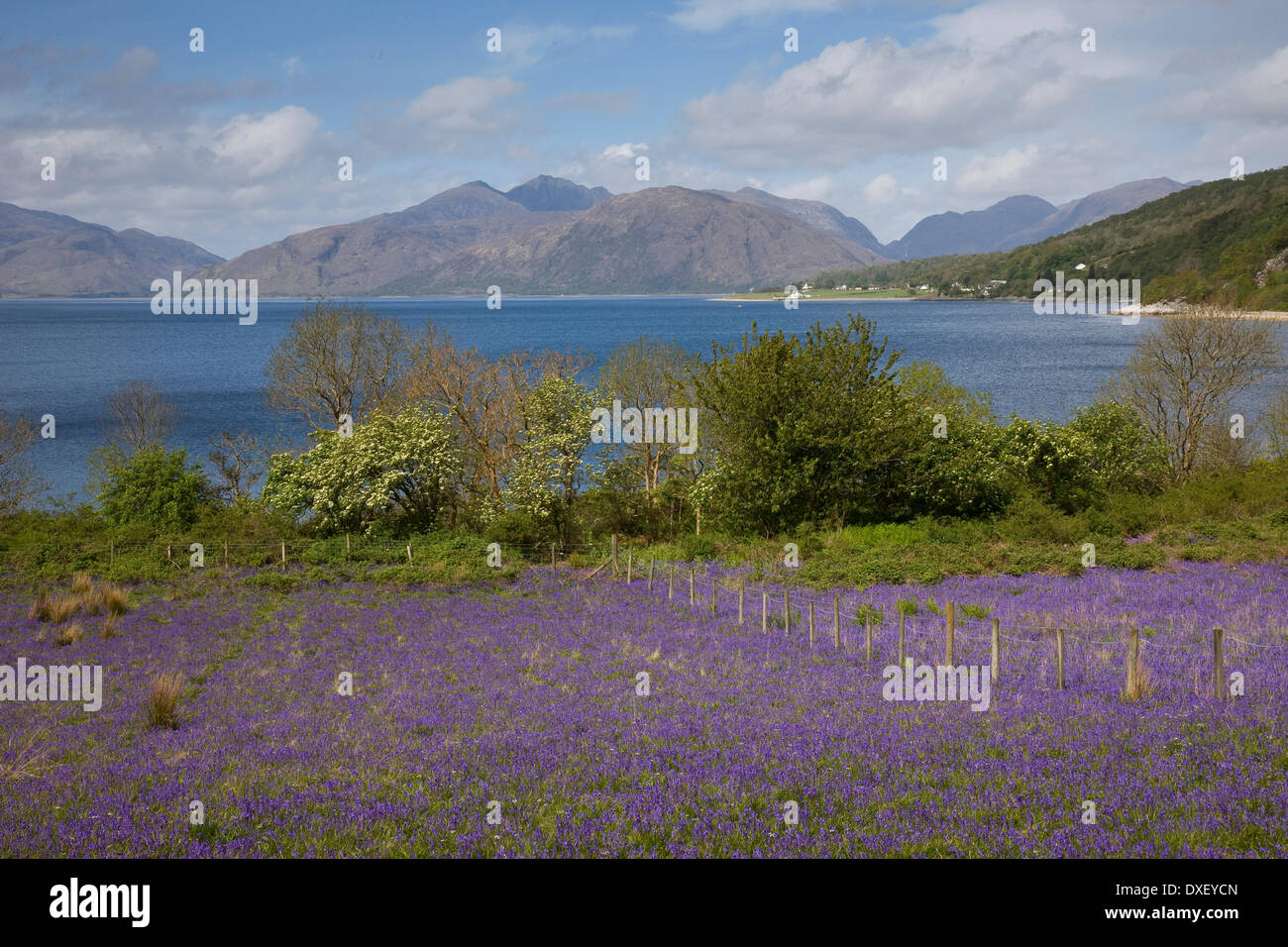 The Morvern Hills from across a filed full of Bluebells, North Ballachulish, West Highlands. - Stock Image