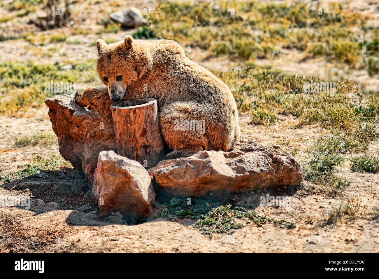 Bear in the zoo - Stock Image