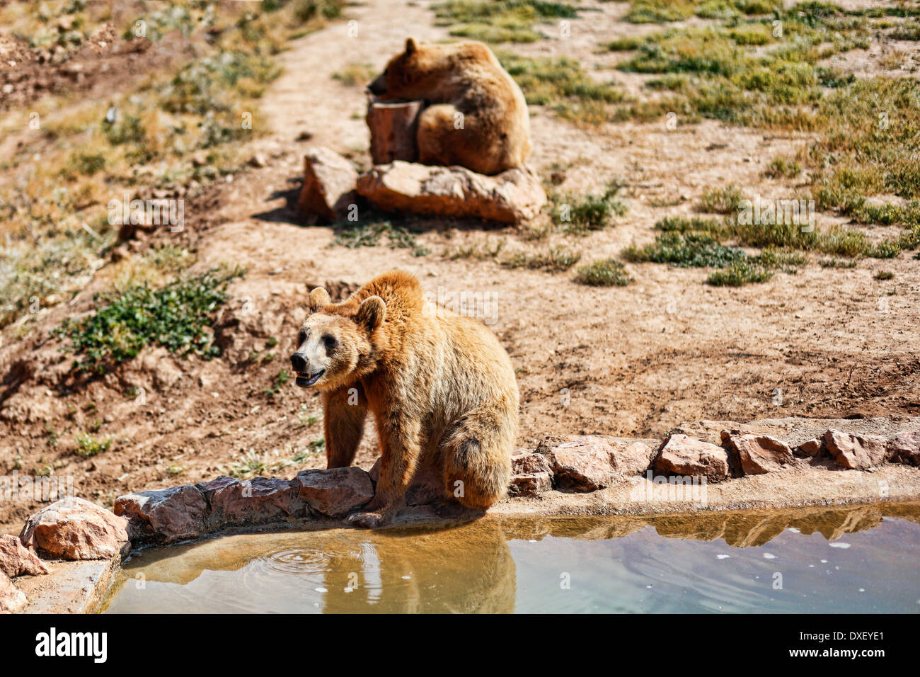 Bears in the zoo - Stock Image