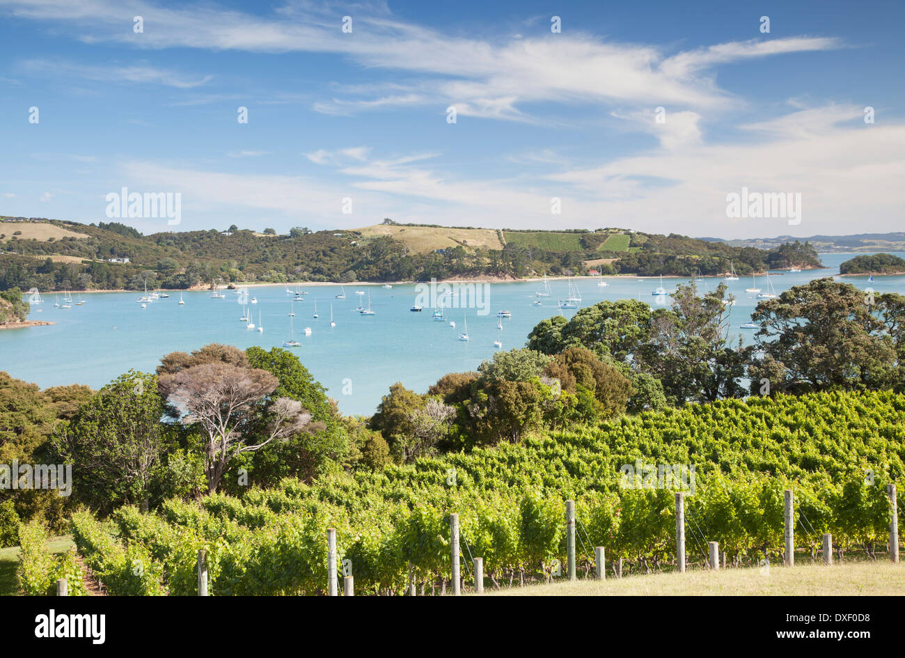 View of Putiki Bay from Goldie Room Vineyard and Restaurant, Waiheke Island, Auckland, North Island, New Zealand - Stock Image