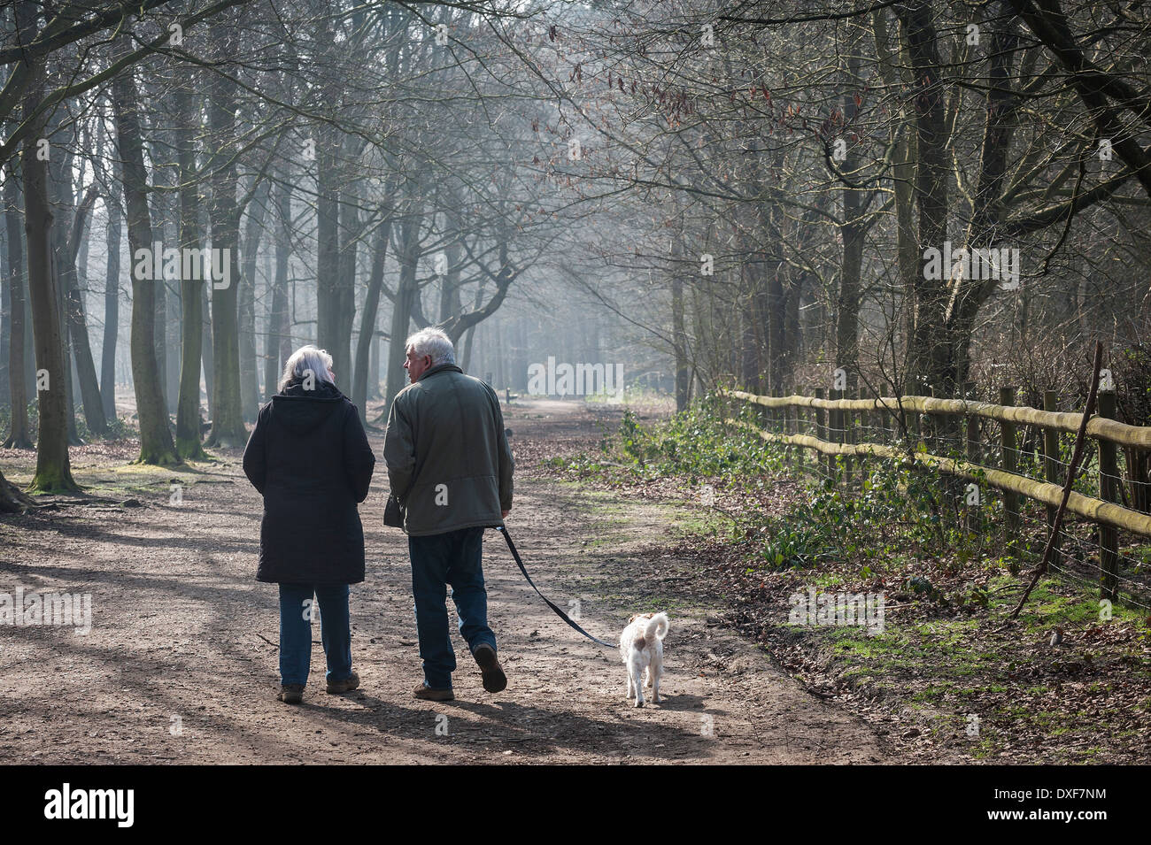 A couple walking their dog Thorndon Park, Essex - Stock Image
