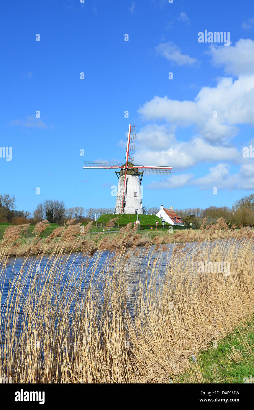 Old windmill in Damme, near Bruges, Flanders, Belgium - Stock Image