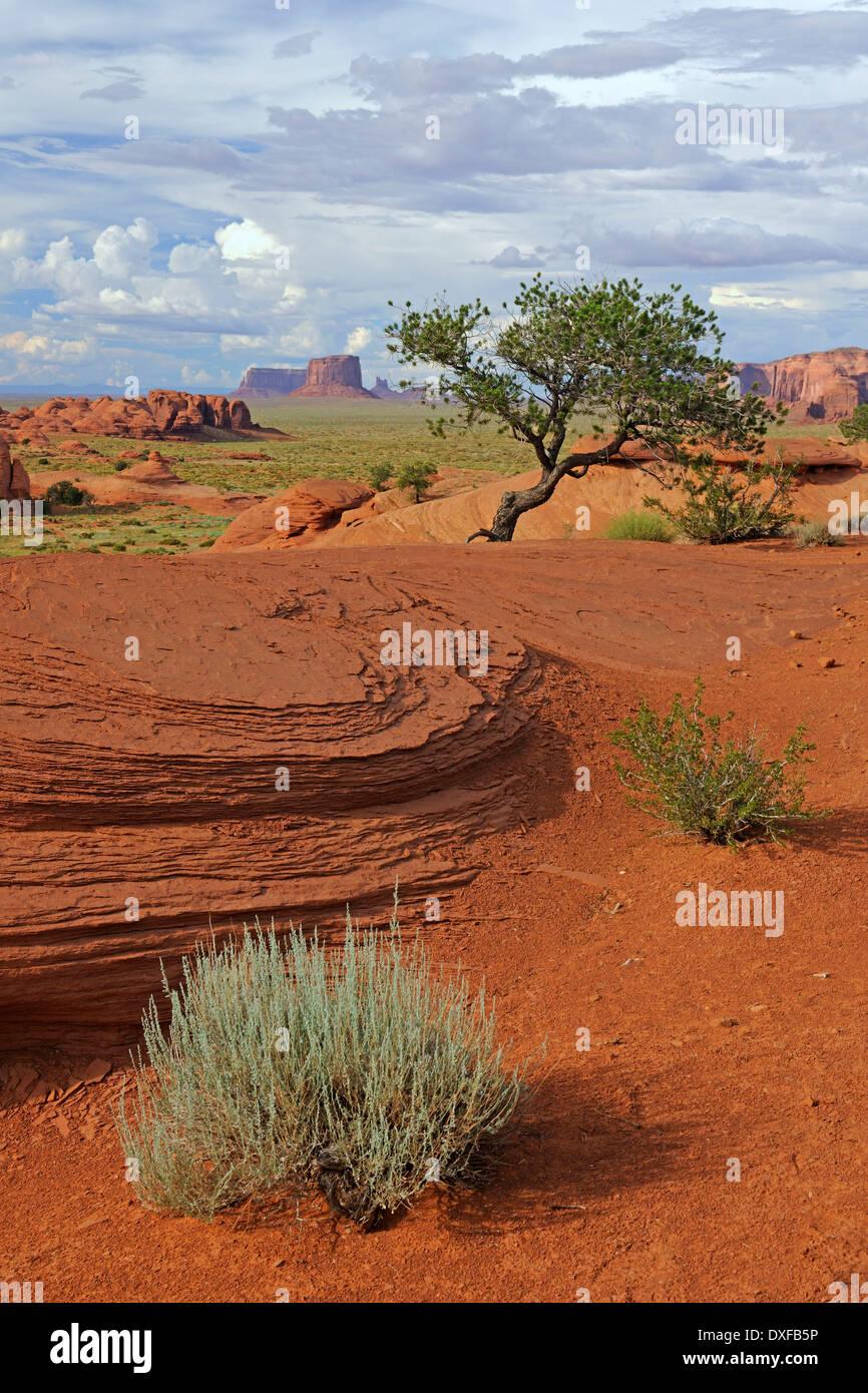 Red sandstone, Mystery Valley, Arizona, USA - Stock Image
