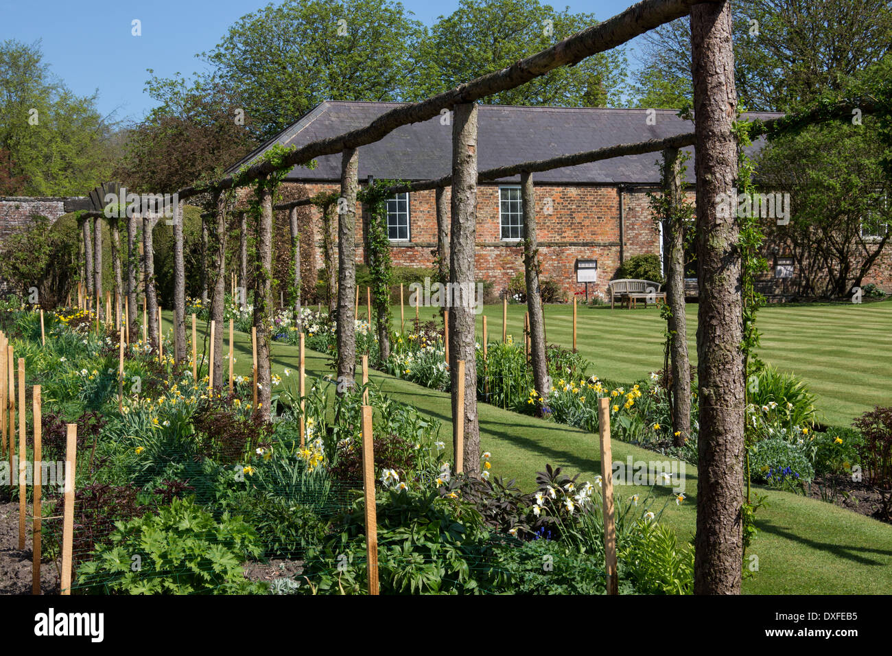 A large walled country garden in Spring time in North Yorkshire in the United Kingdom. - Stock Image