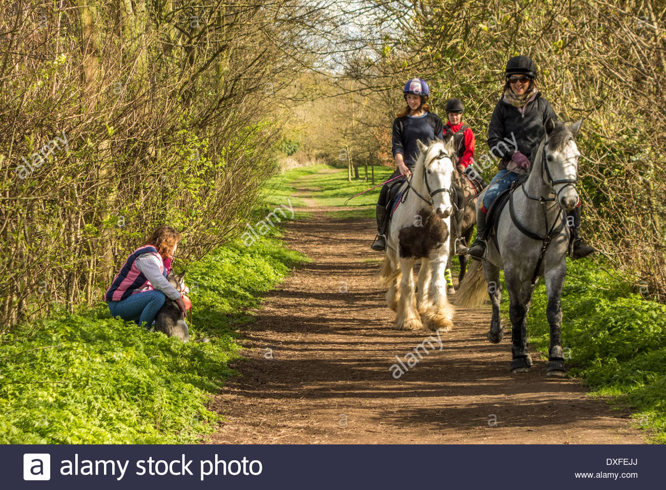 A dog owner keeps her dog calm as a group of horseriders pass by on a rural bridleway near to Fulbourn, Cambridge - Stock Image