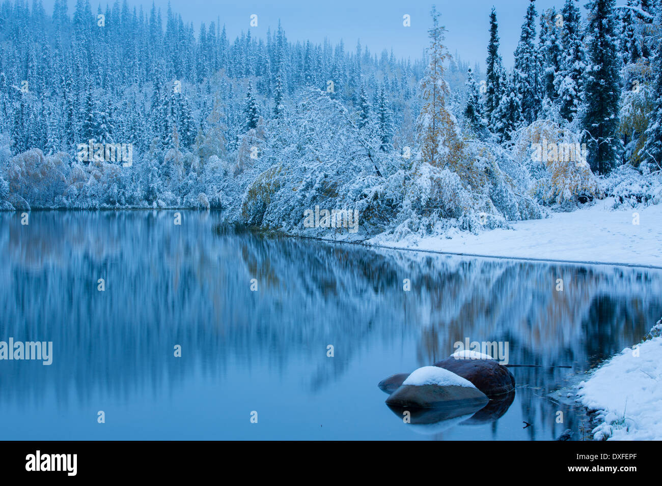 Early snow and autumn colours at Five Mile Lake, on the Silver Trail nr Mayo, Yukon Territories, Canada Stock Photo