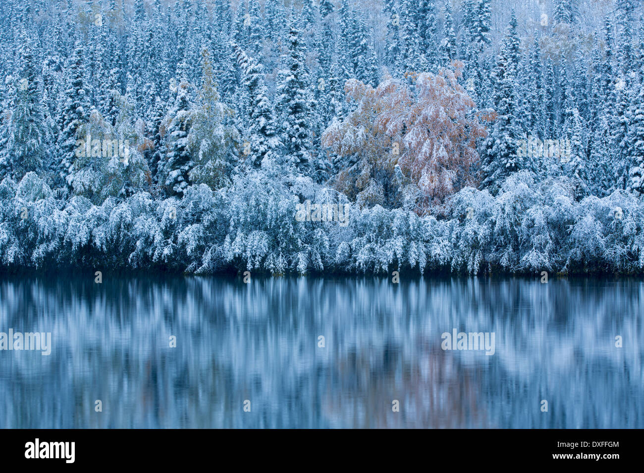 Early snow and autumn colours at Five Mile Lake, on the Silver Trail nr Mayo, Yukon Territories, Canada - Stock Image