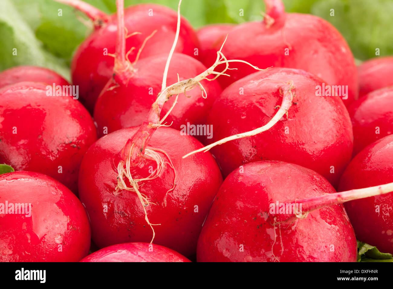 radish macro - Stock Image