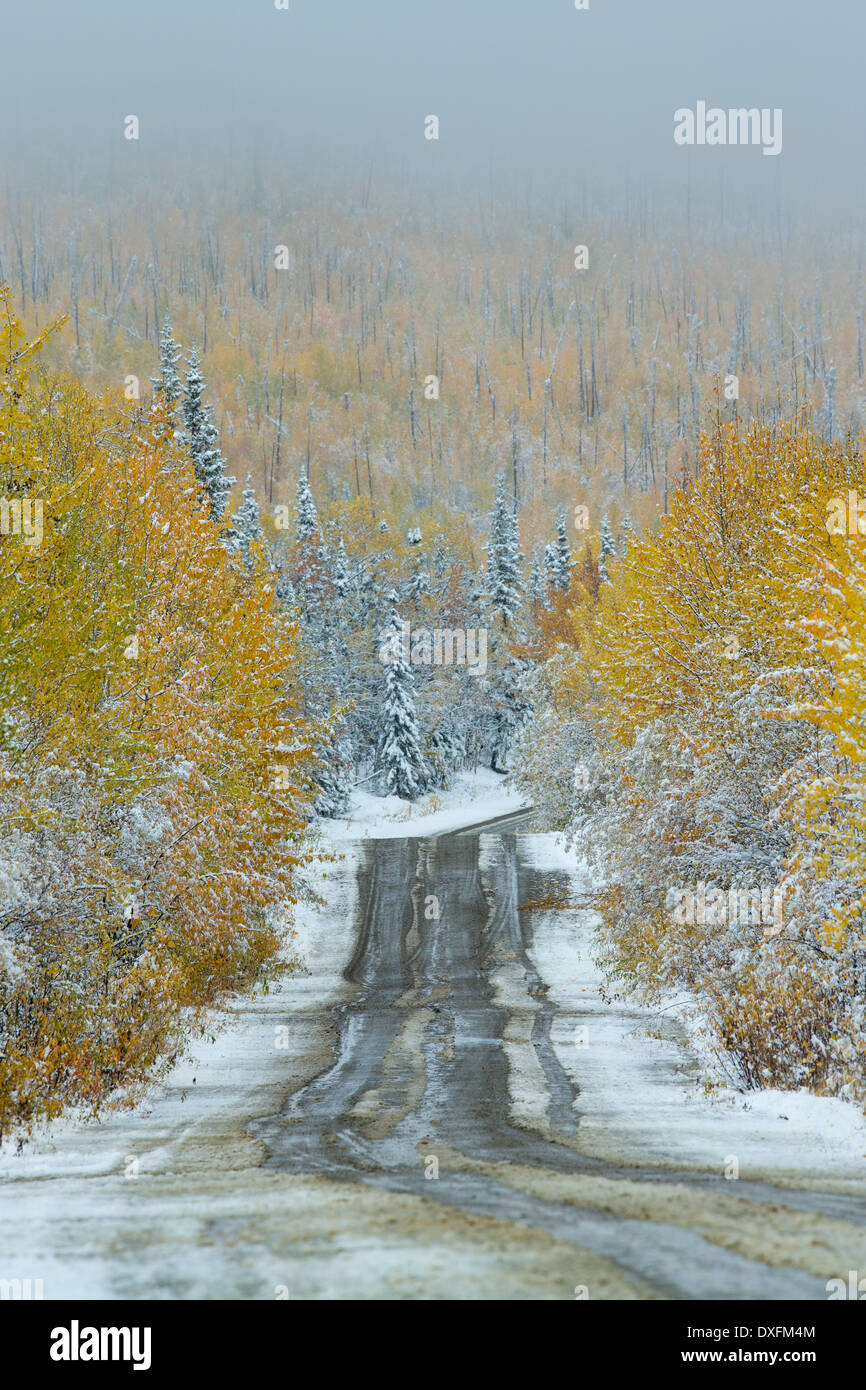 Autumn colours and the first snowfall on the road to Keno, Silver Trail, Yukon Territories, Canada - Stock Image
