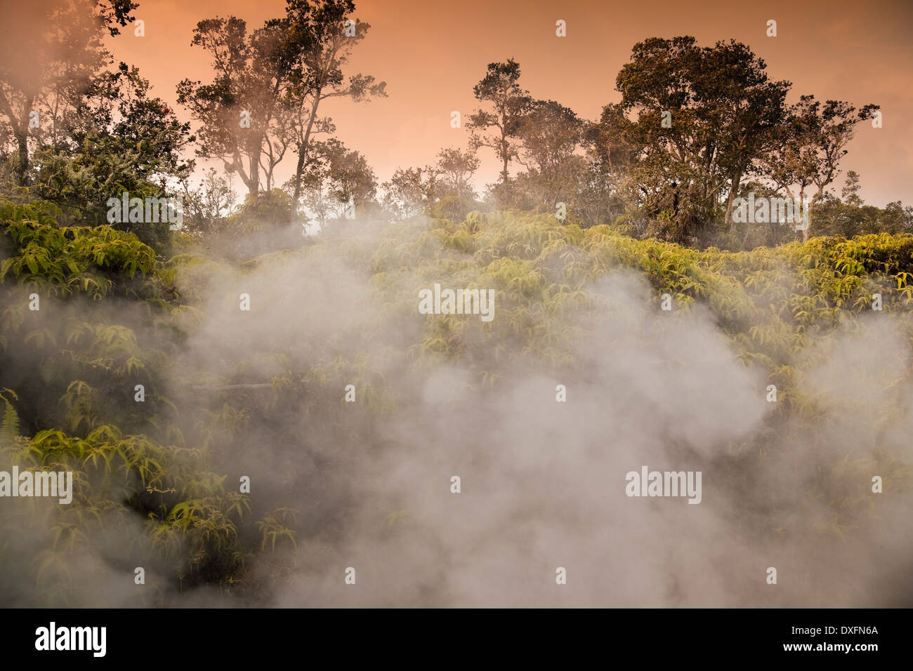 Steam vents amidst ohia and ferns in Volcanoes National Park, Hawaii. - Stock Image
