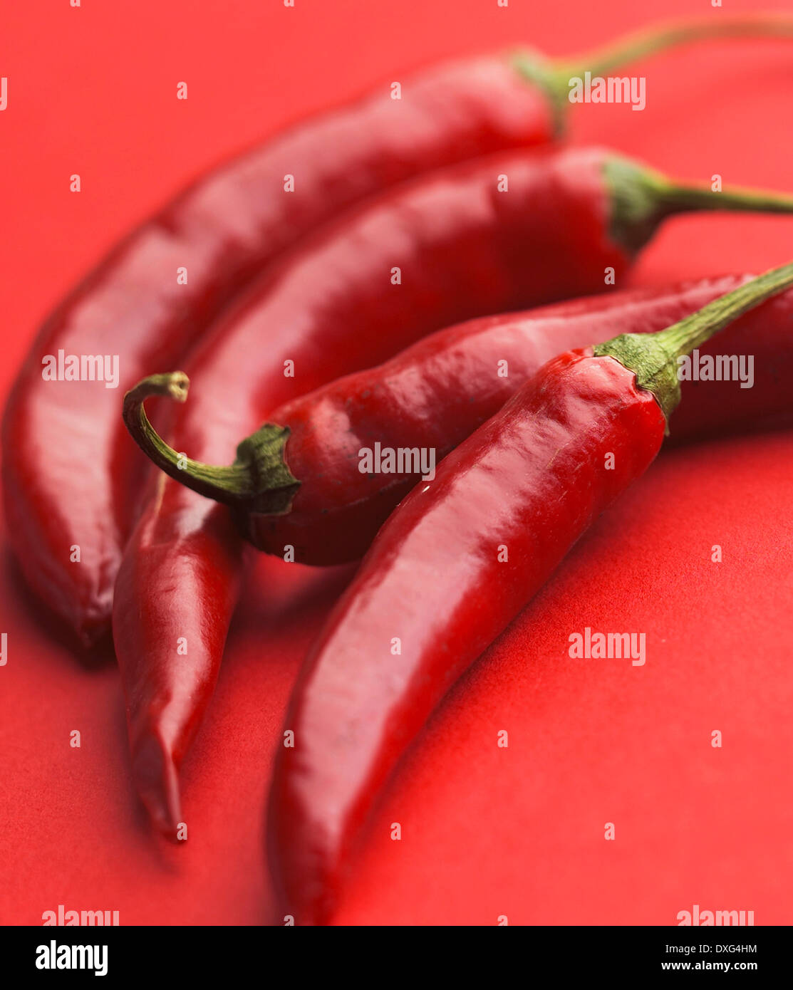 Red Chilli Peppers On Red Background - Stock Image