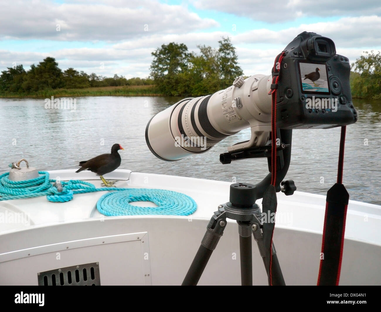 Time for your close-up Miss Moorhen - A large telephoto lens is often required to get you close to the wildlife. - Stock Image