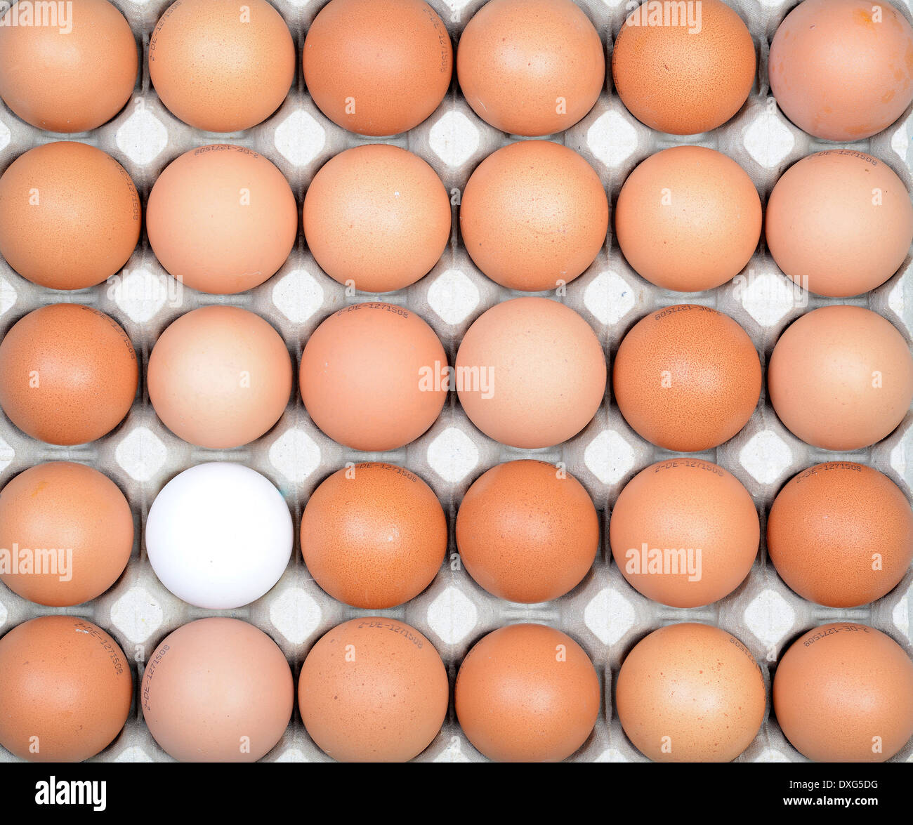 Hen's eggs, brown and white - Stock Image