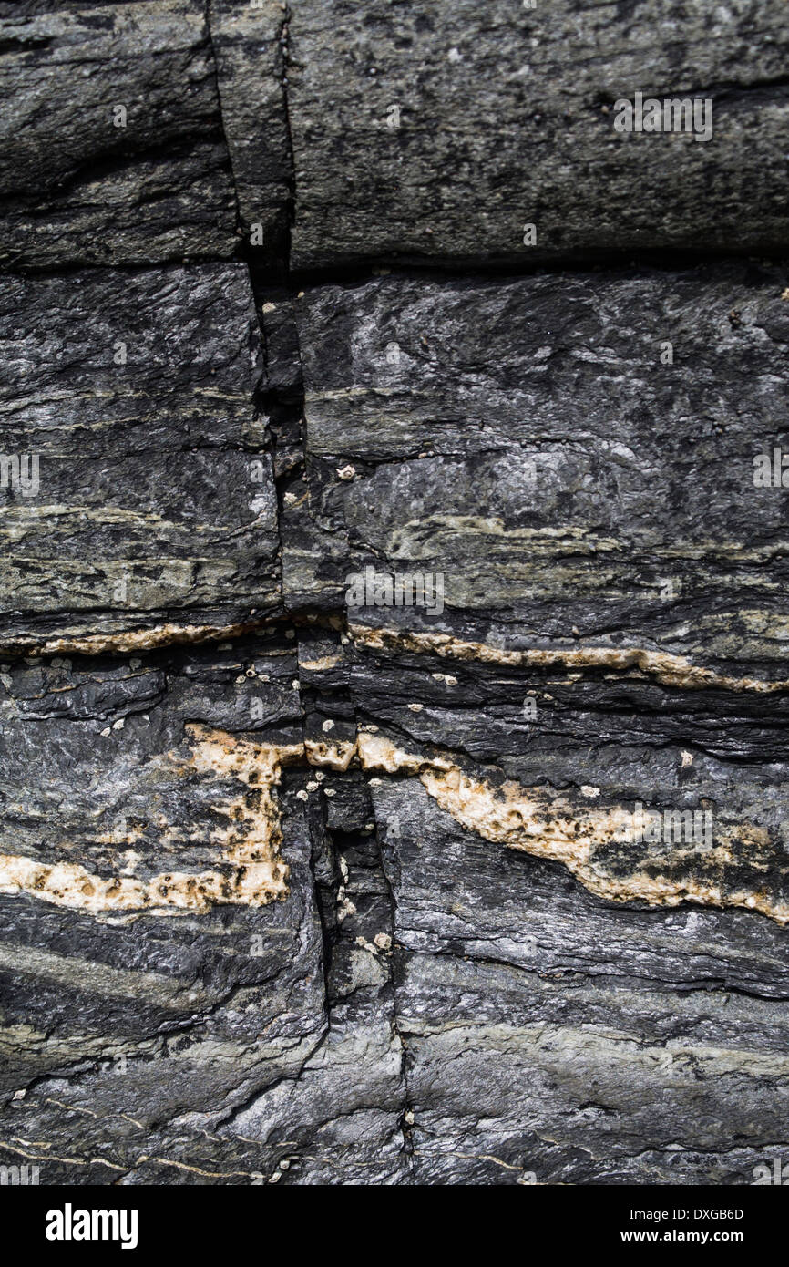 Close up of metamorphic rock at Saligo Bay, Islay, showing fault lines in rock and quartz intrusion - Stock Image