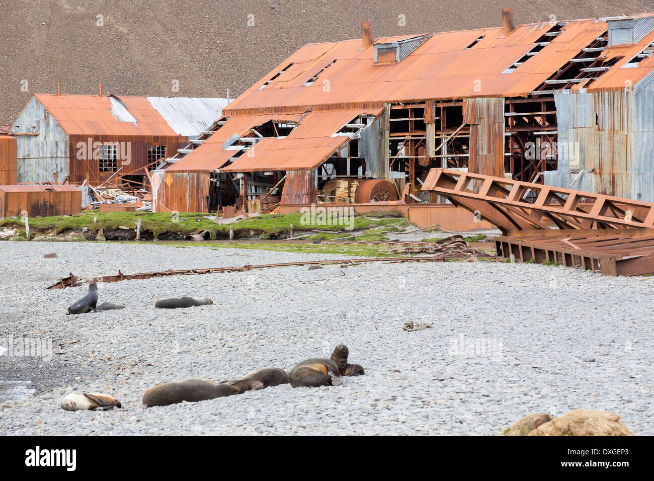 Stromness Whaling Station on South Georgia, it was operational until 1961, - Stock Image