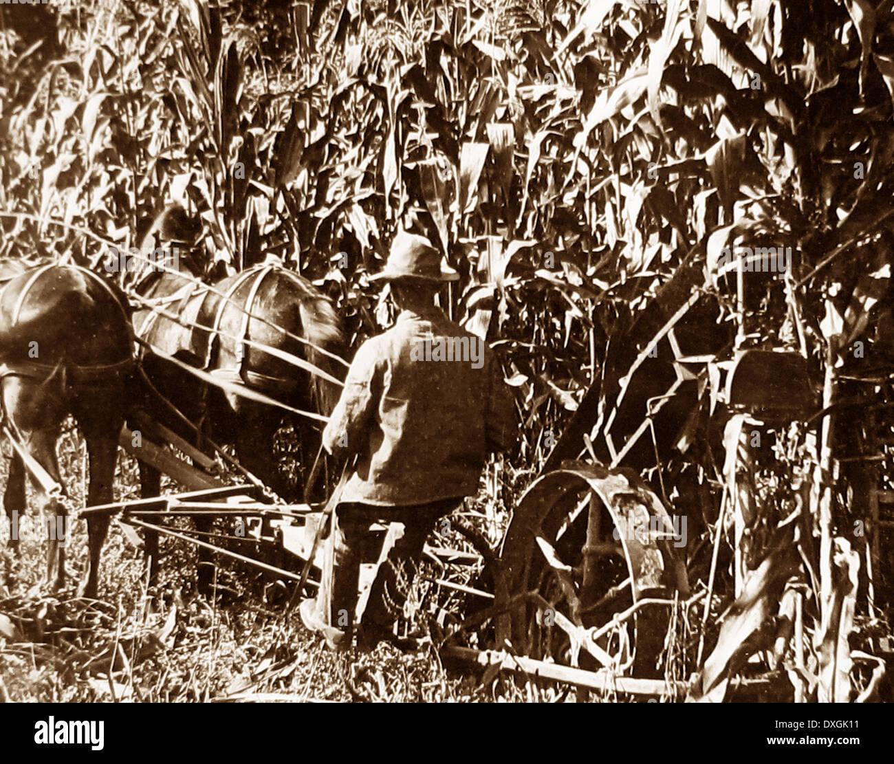 Corn binder Crawford County Pennsylvania USA early 1900s - Stock Image