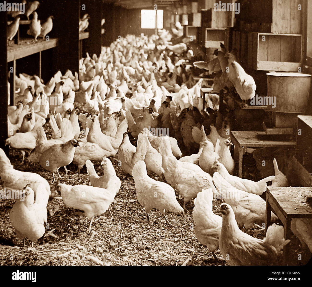 Corning Egg Farm, Bound Brook, New Jersey, USA early 1900s - Stock Image