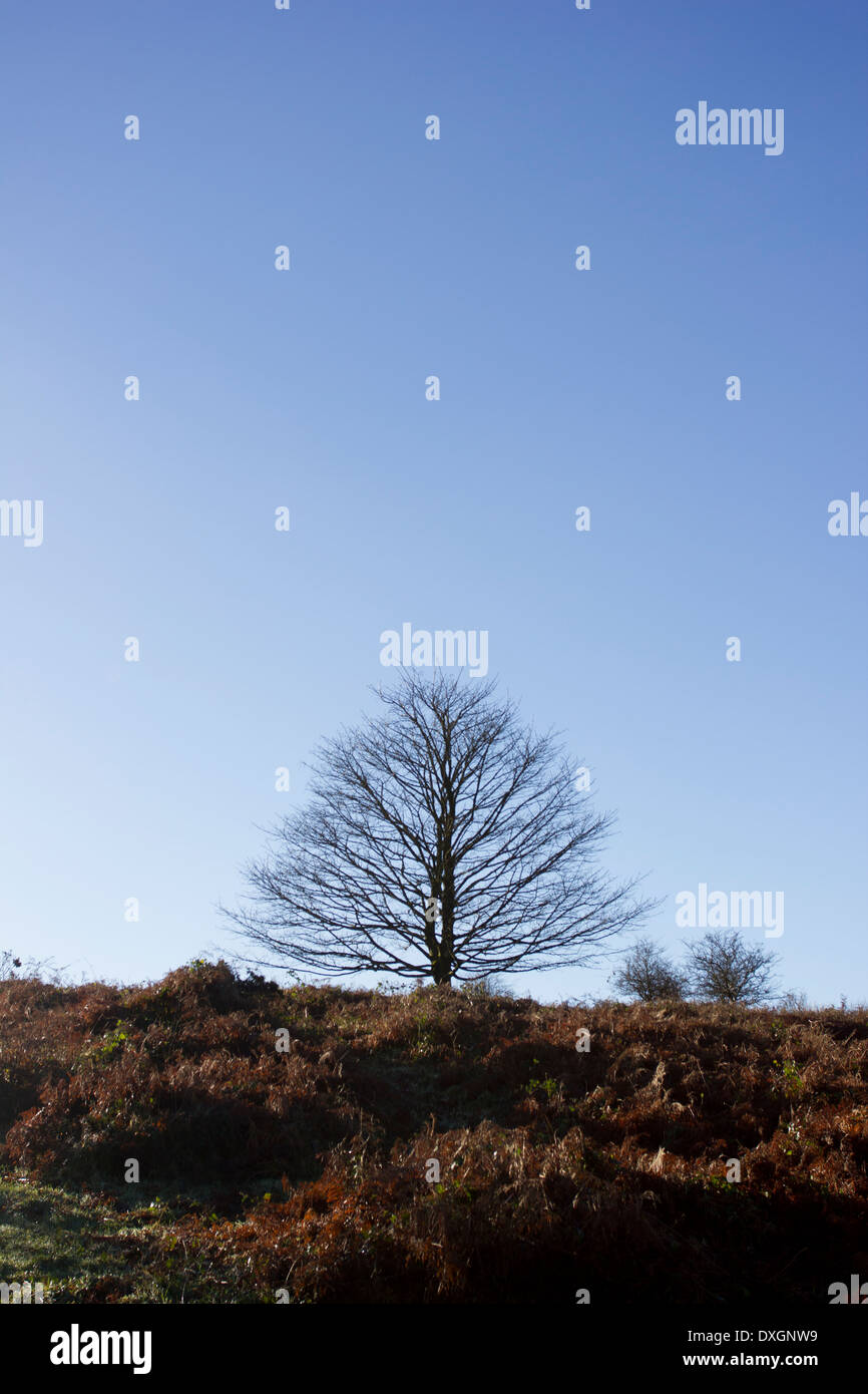 A silhouette of a leafless tree on a hill against a cloudless blue sky - Stock Image