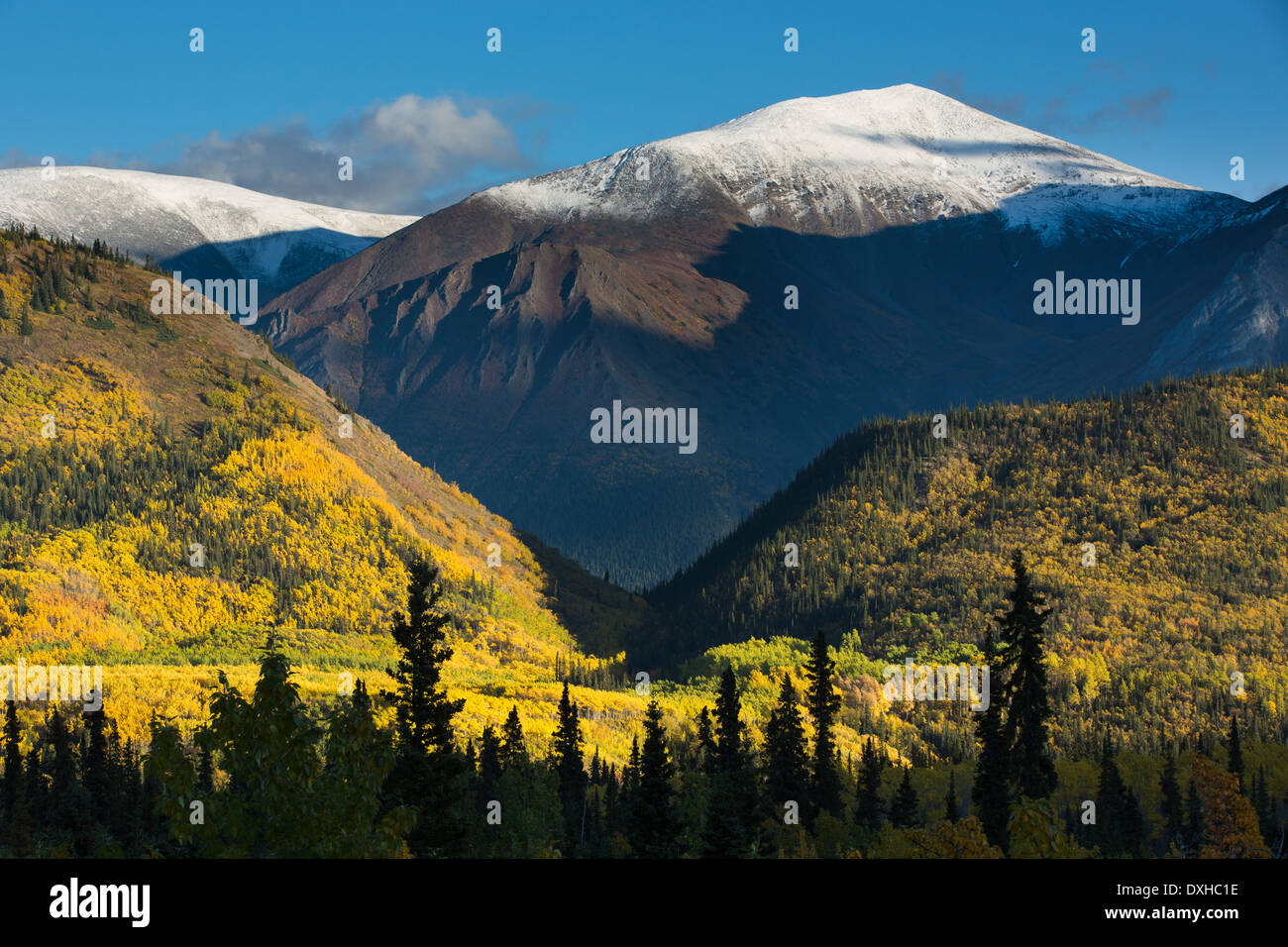 autumn colours along the South Klondike Highway and a shadow resembling the head of a wolf on Young Peak British Columbia Canada - Stock Image