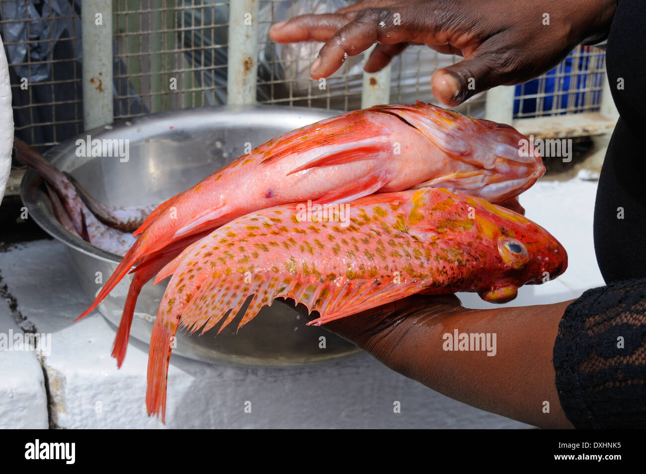 Coloured Fish Stock Photos & Coloured Fish Stock Images - Alamy