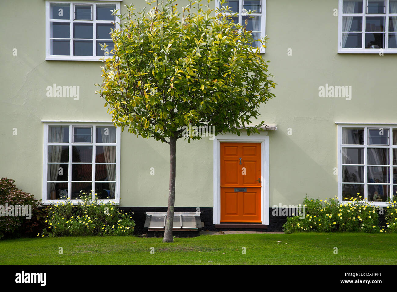 House on the village green with tree outside, Walberswick, Suffolk, England, - Stock Image