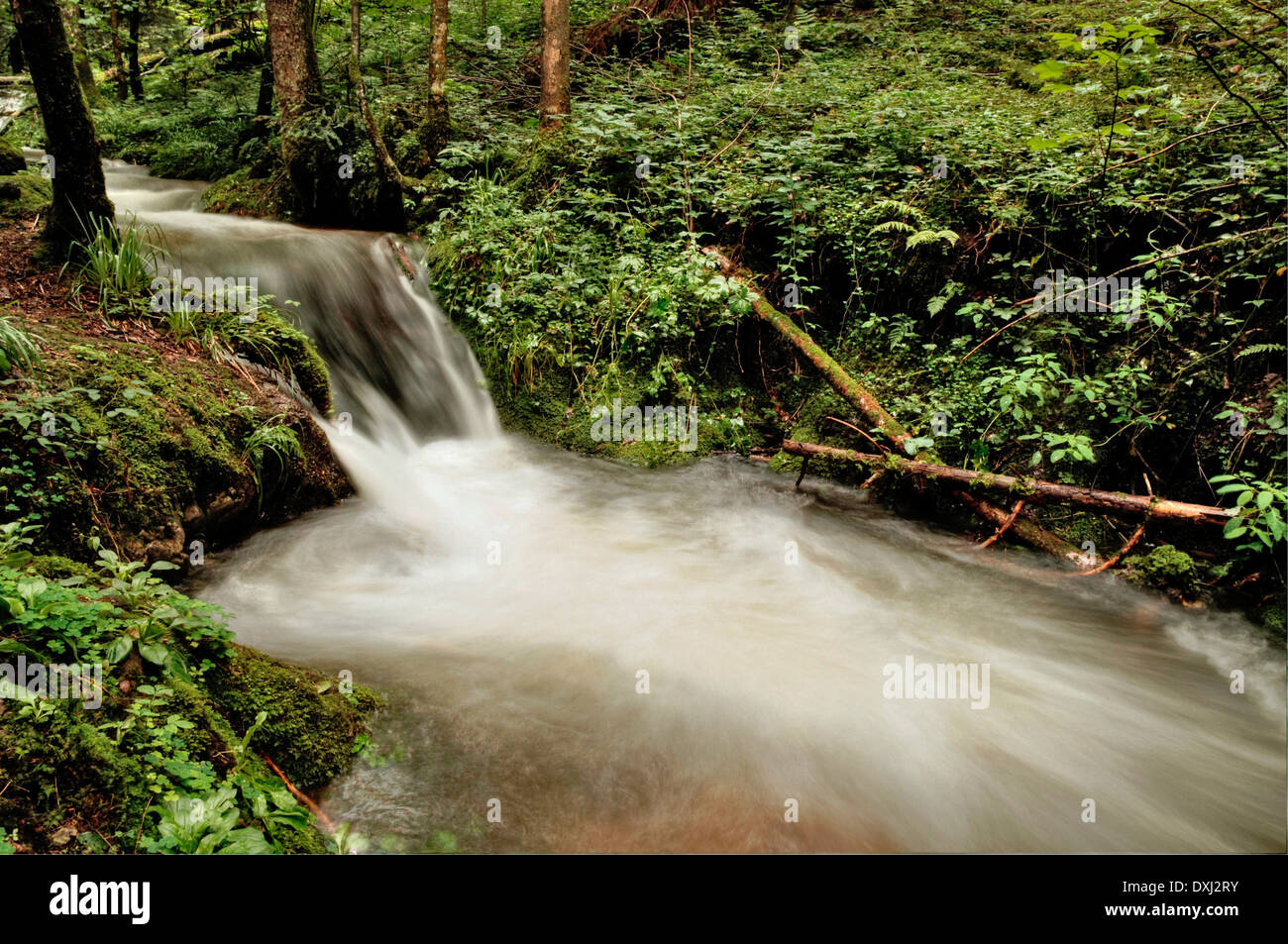 Mountain river in the Black Forest, DGebirgsbach in the Black Forest, Germany, - Stock Image