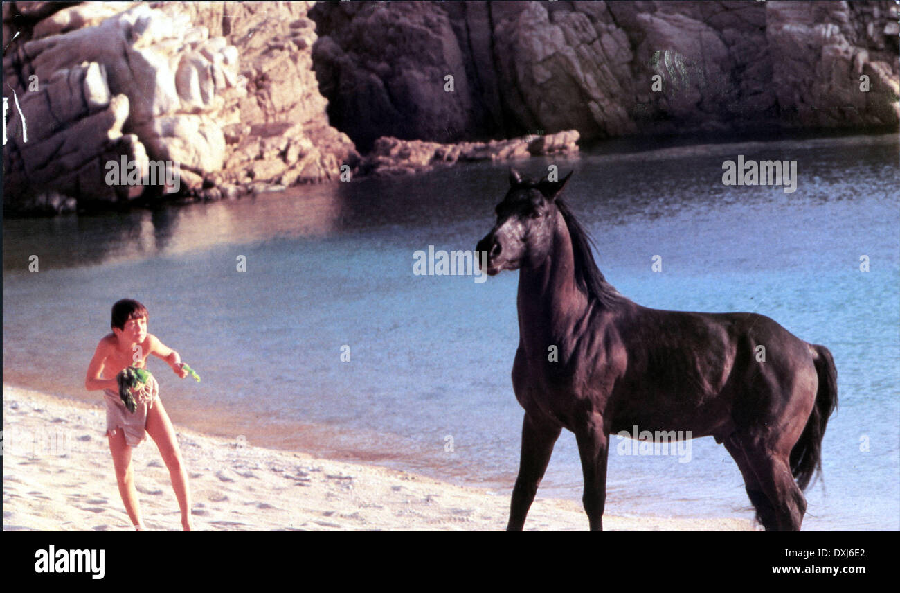 THE BLACK STALLION - Stock Image