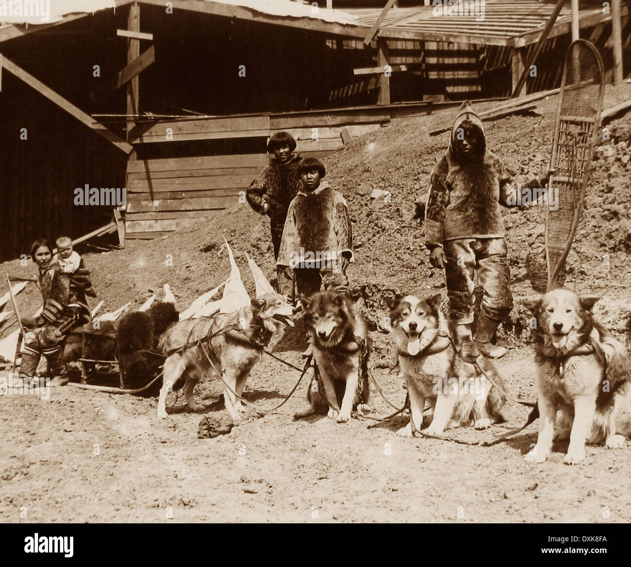 Eskimo dog team St. Louis World's Fair USA in 1904 - Stock Image