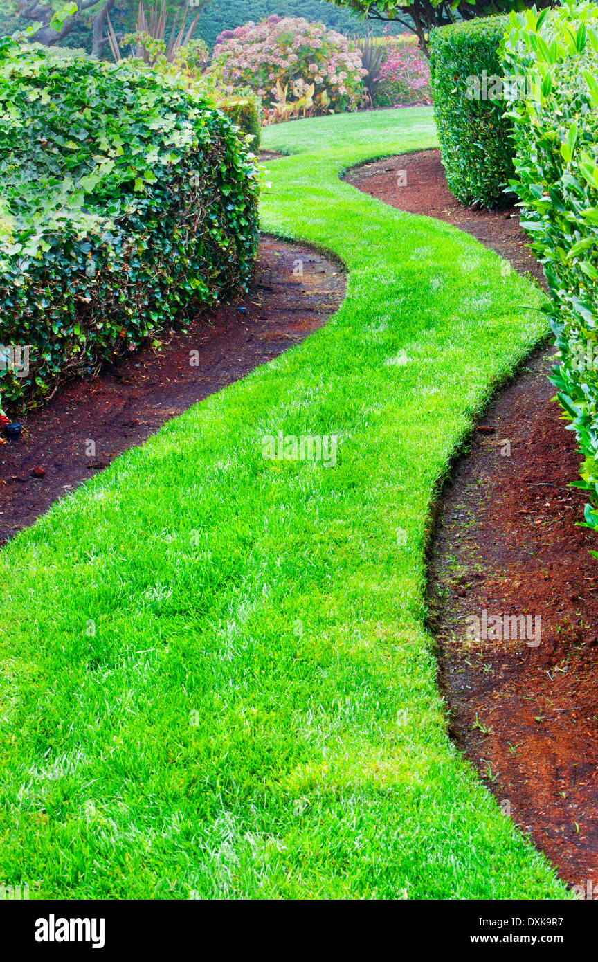 Winding grass path in landscaped garden - Stock Image