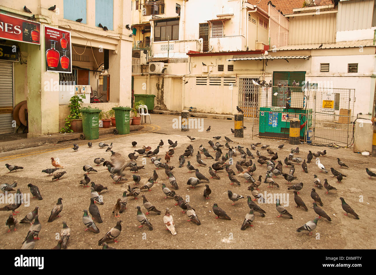 pigeons scratch for food in a courtyard - Stock Image