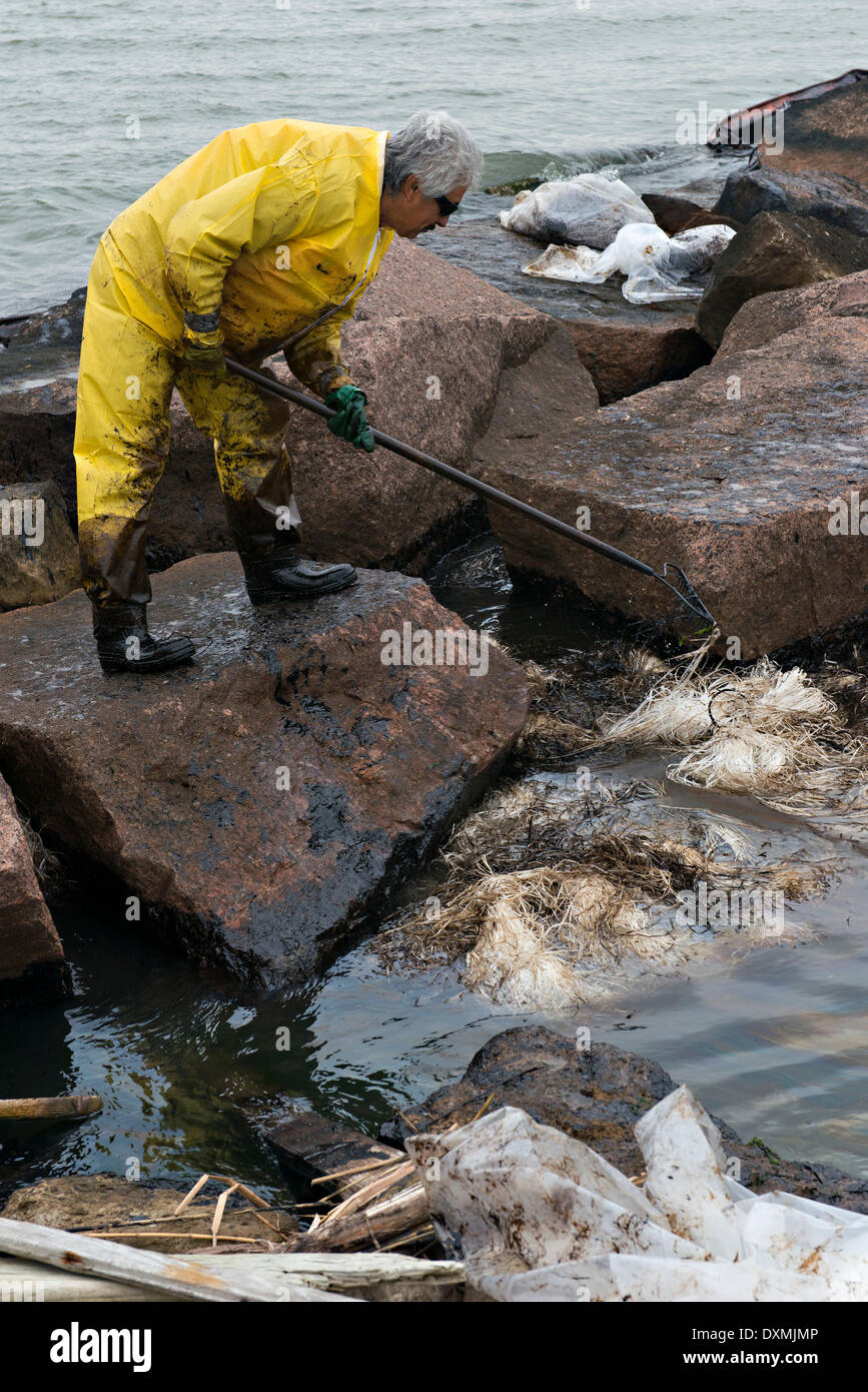 Cleanup crews remove oiled sand and debris after a collision between a bulk carrier and the barge near Texas City Dike spilling oil into an environmentally sensitive area at Big Reef March 26, 2014 in Galveston, Texas. - Stock Image