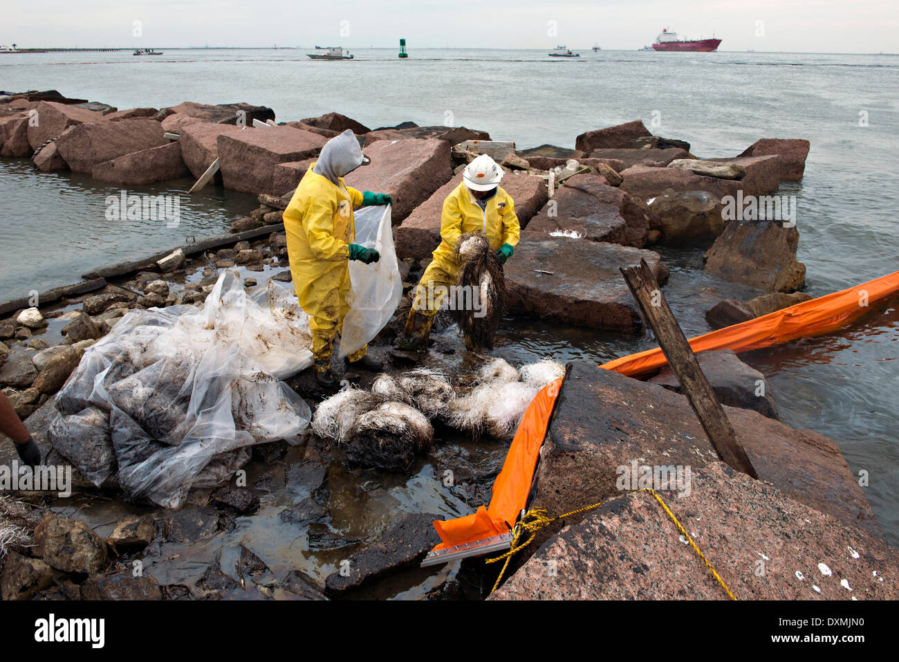 Cleanup crews fill bags with oiled sand and debris after a collision between a bulk carrier and the barge near Texas City Dike spilling oil into an environmentally sensitive area at Big Reef March 26, 2014 in Galveston, Texas. - Stock Image