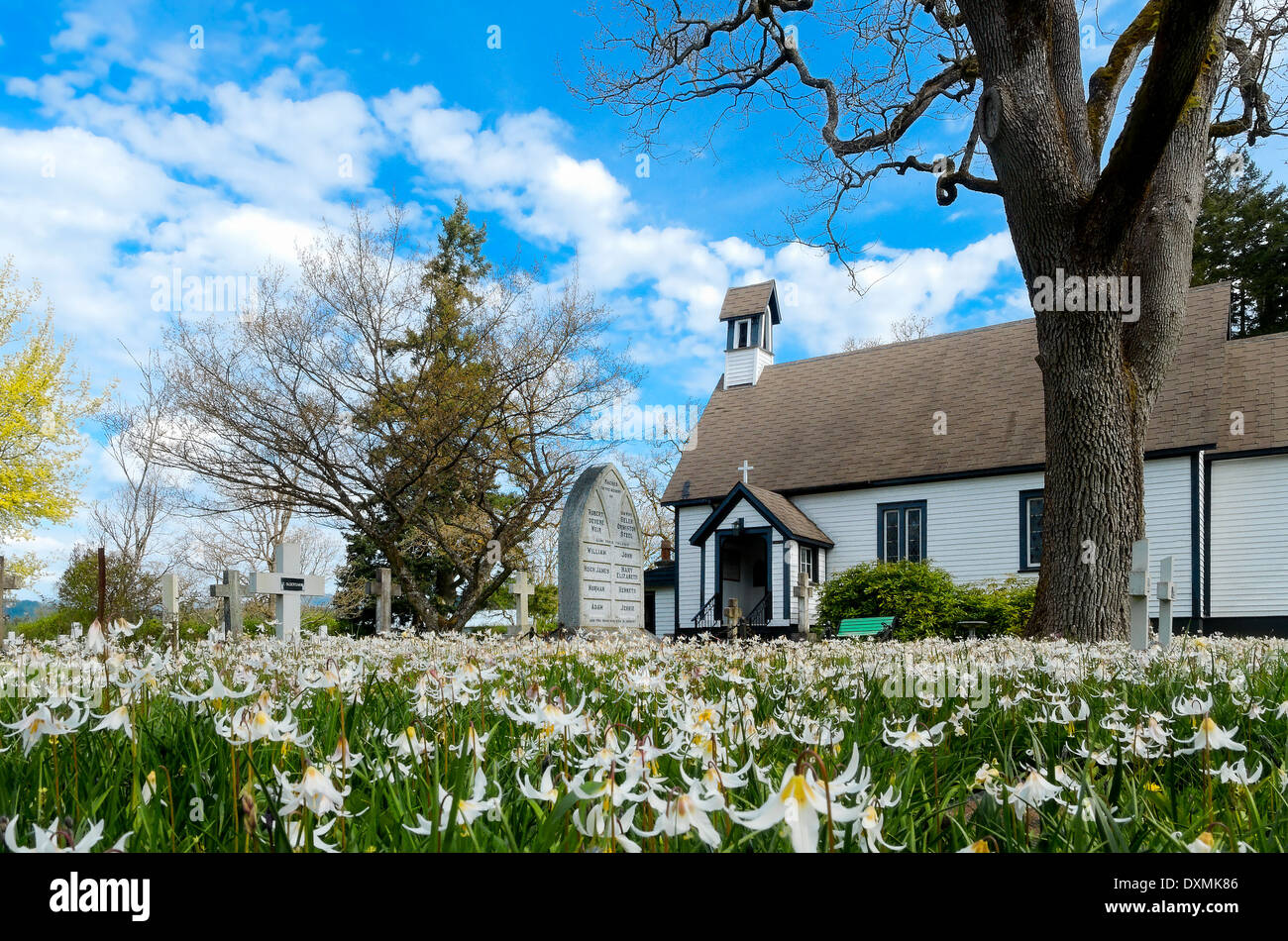 Native white fawn lilies bloom in Spring, Saint Mary the Virgin Anglican Church, Metchosin, British Columbia, Canada - Stock Image