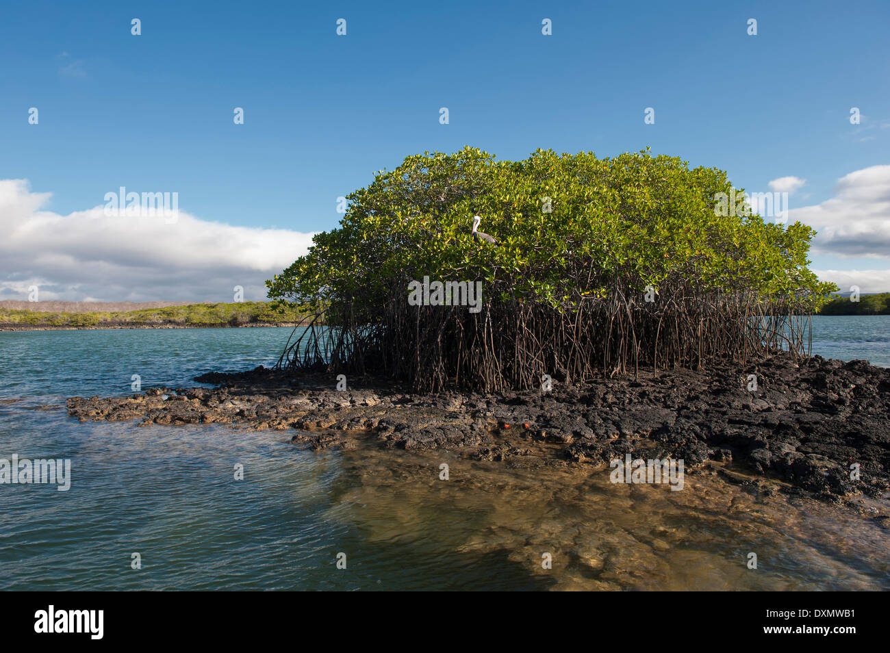 Black Turtle Bay, Santa Cruz Island, Galapagos, Ecuador, Unesco World Heritage Site - Stock Image