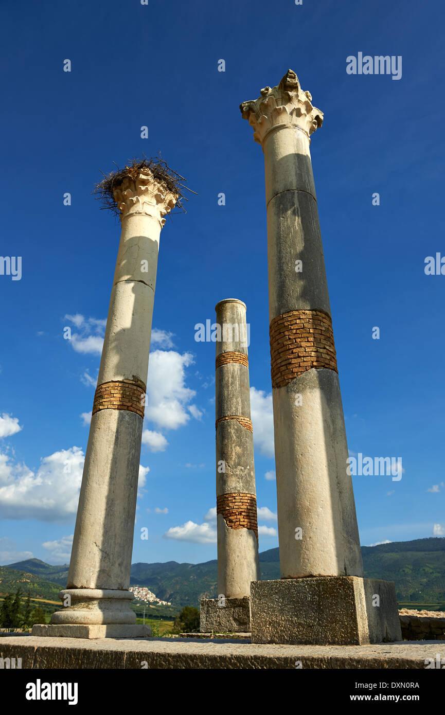 The Corinthian columns of Capitoline Temple, Volubilis Archaeological Site, near Meknes, Morocco - Stock Image